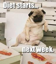 diet_pug